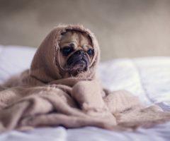 Как постирать одеяла из различных материалов