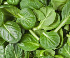 Можно ли замораживать шпинат на зиму в домашних условиях