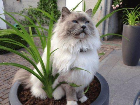 Кот в цветочном горшке