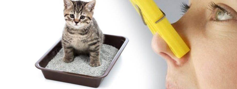 Как легко удалить запах кошачьей мочи в квартире