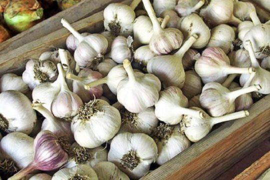 Решаем овощные проблемы: почему сохнет чеснок на грядке и что делать для его лечения?