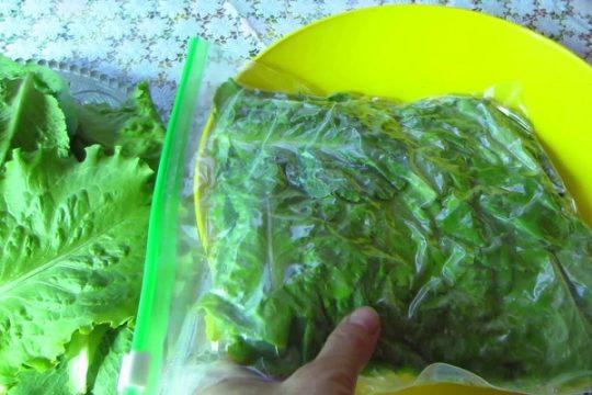 заморозка салата
