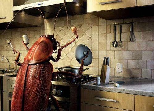 таракан картинка