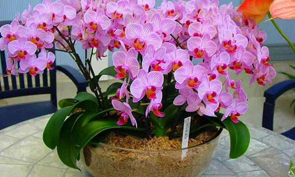 Орхидеи: уход в домашних условиях: виды орхидей, полив и размножение