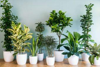 Комнатные растения, которые приносят в дом счастье и благополучие