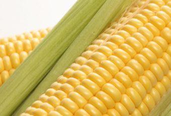 Как можно хранить вареную кукурузу – в воде или нет