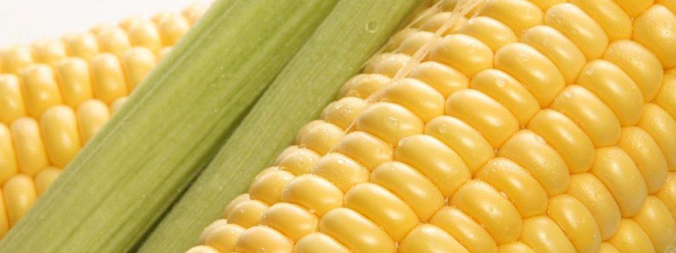Как можно хранить вареную кукурузу — в воде или нет