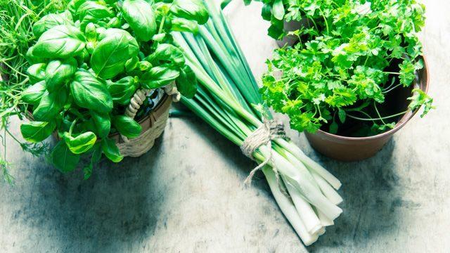 Как вырастить зелень на подоконнике зимой без подсветки