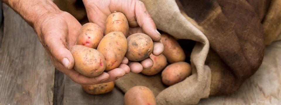 Как правильно хранить картофель в домашних условиях в квартире зимой