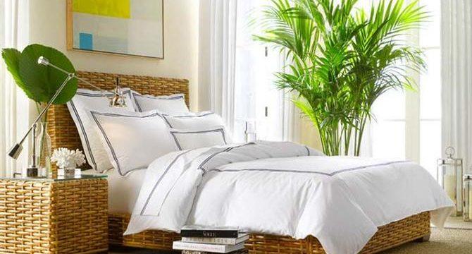 Комнатные растения для спальни: какие лучше выбрать, советы