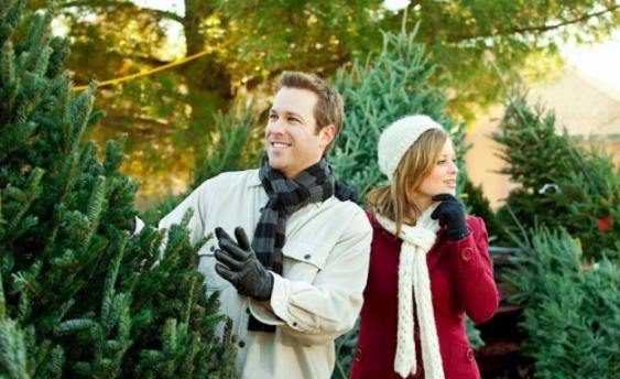 Как выбрать елку на Новый год 2019: где и какую покупать, советы
