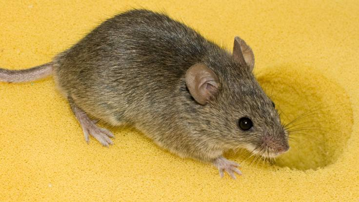 Как избавиться от мышей с помощью бутылки