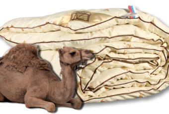 Как выбрать одеяло из верблюжьей шерсти: какой производитель лучше, отзывы