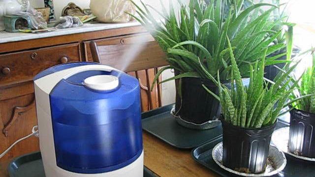 Оптимальная влажность воздуха в квартире: какой должна быть, как измерять и регулировать