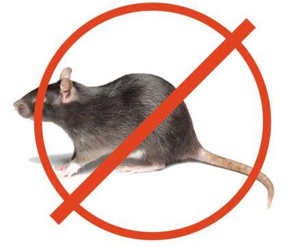 химические средства борьбы с мышами
