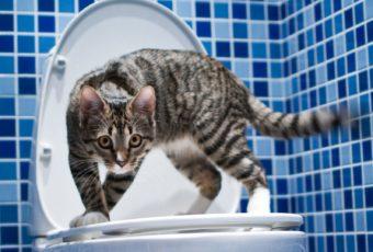 Как быстро избавиться от запаха кошачьей мочи в квартире