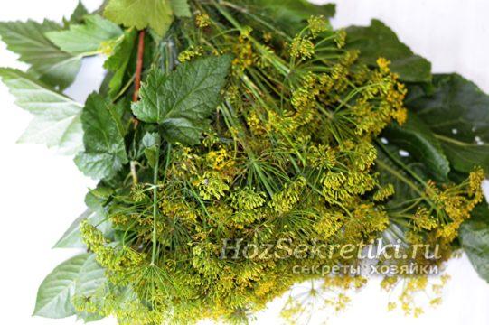 пряные травы для засолки