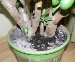 Как избавиться от белого налета на земле в цветочных горшках