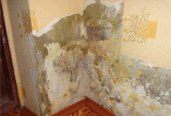 Что делать при появлении плесени на стене в квартире