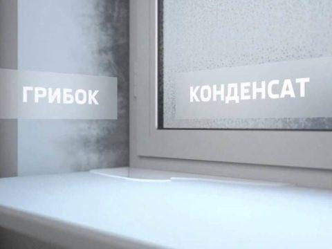 причина плесени на окнах