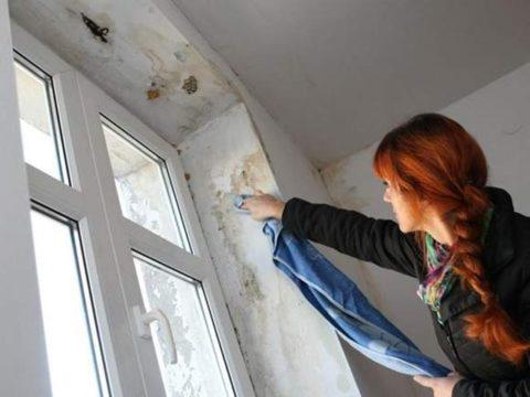 удалить плесень на окнах