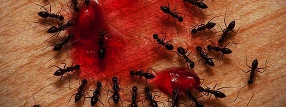 Способы избавиться навсегда от муравьёв в квартире