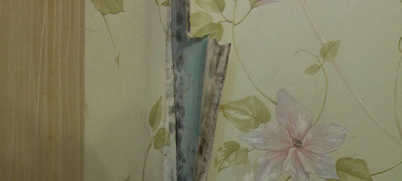 Черная плесень под обоями, на стене или после ремонта: что делать, как избавиться и чем обработать