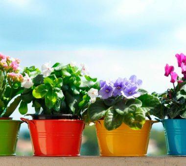 Комнатные растения, которые принесут в дом счастье и удачу