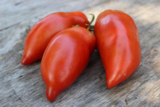 Рейтинг лучших сортов томатов для открытого грунта