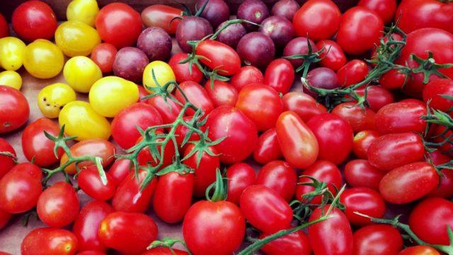 Тепличные сорта помидоров