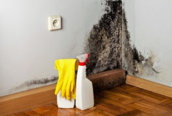 Плесень на стенах: как избавиться от нее навсегда