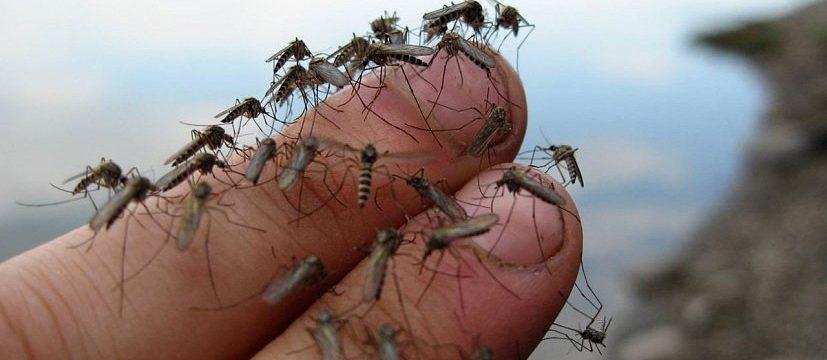 Как избавиться от комаров в домашних условиях