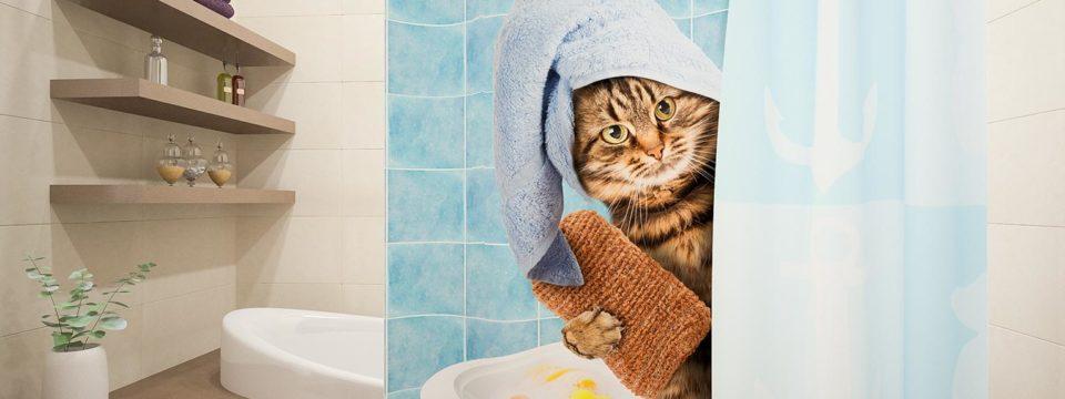 Как удалить плесень со шторы в ванной?
