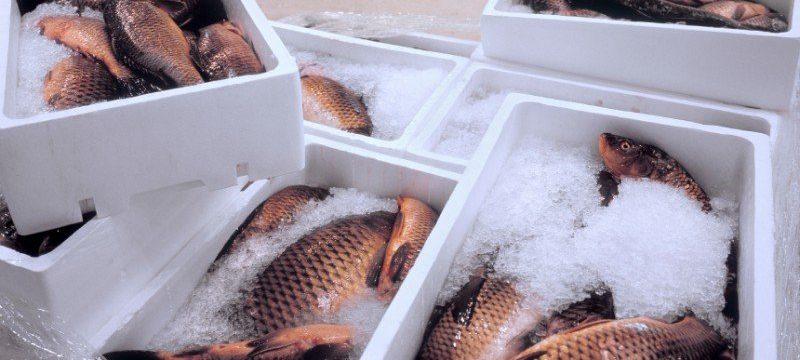 Сколько можно хранить охлажденную рыбу: срок хранения