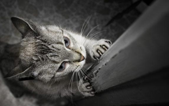 отучить коту драть обои и мебель