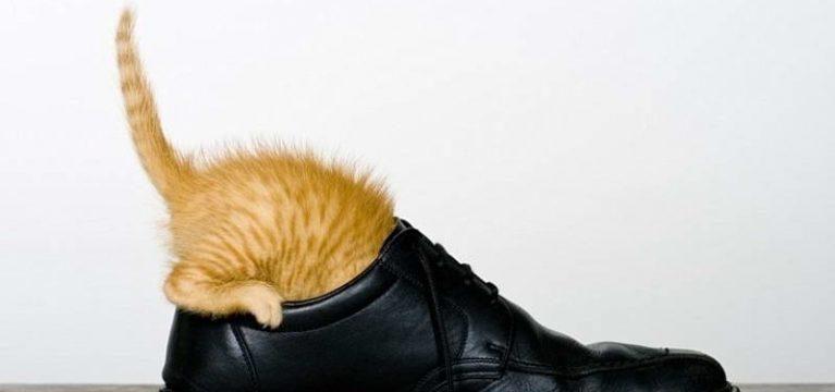 Как и чем вывести запах кошачьей мочи из обуви: эффективные способы и средства