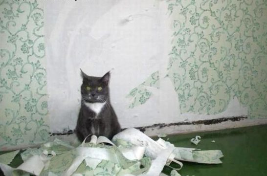 отучить кота драть обои