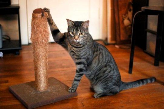 отучить кота драть мебель