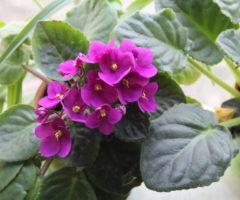 10 комнатных цветов, которые принесут деньги в дом