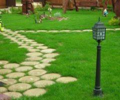 Как правильно посадить газонную траву: пошаговая инструкция