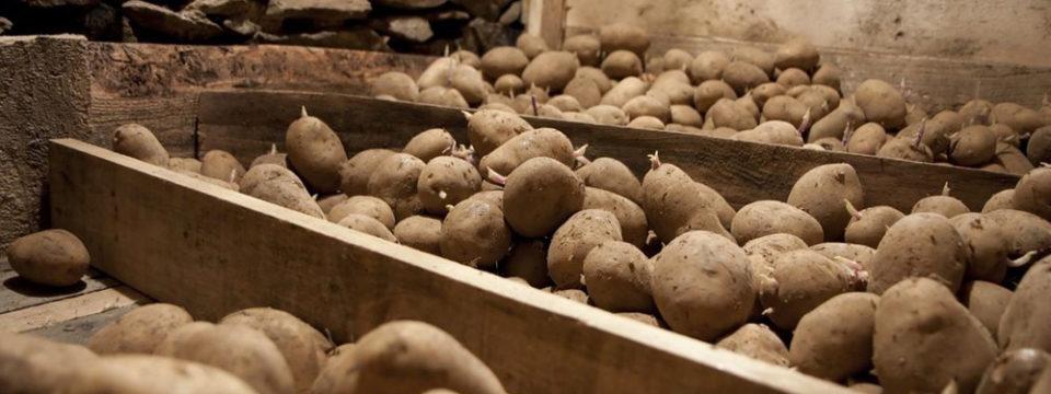 Правила хранения картошки
