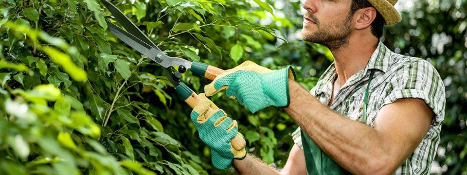 12 лайфхаков для садоводов