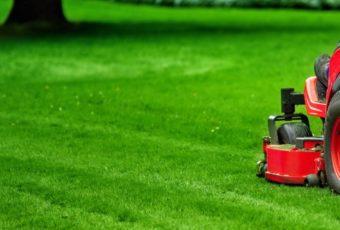 Как создать красивый и ухоженный газон