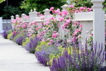15 самых красивых цветов для дачи