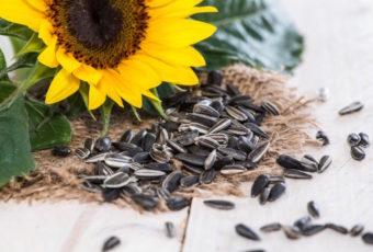 Почему нельзя есть много семечек