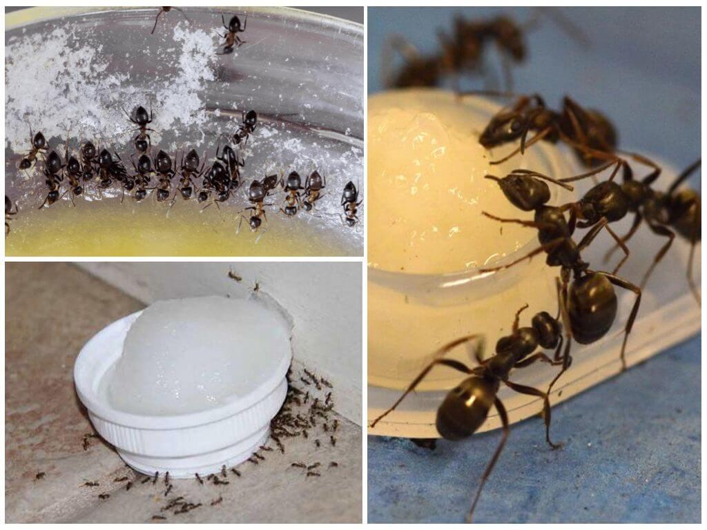 сахарная вода от муравьев