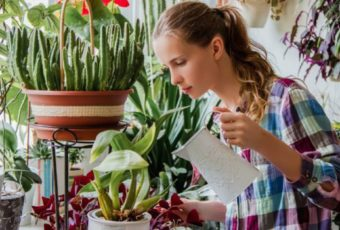 Опасные комнатные растения, от которых нужно избавиться