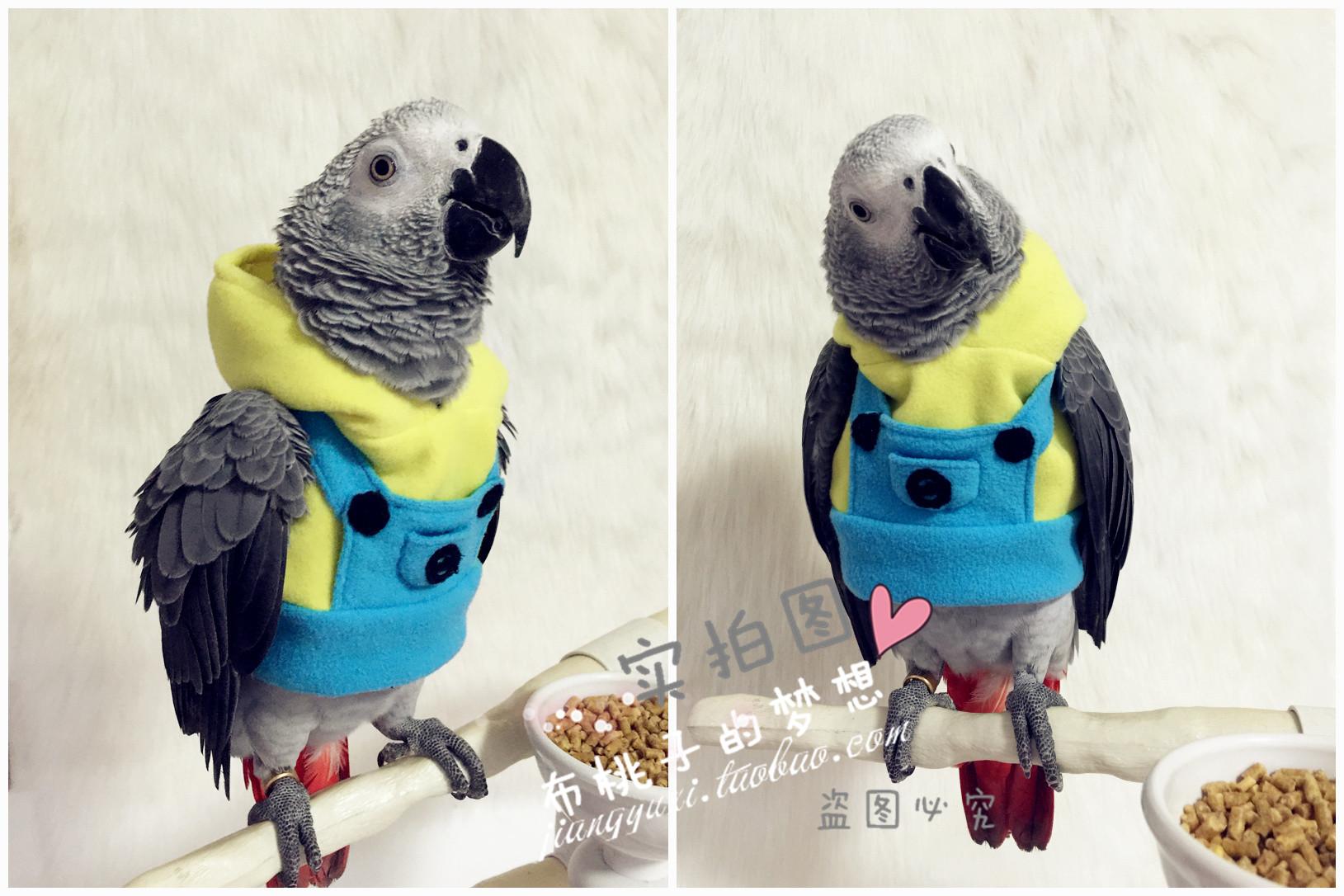 Костюм для попугая