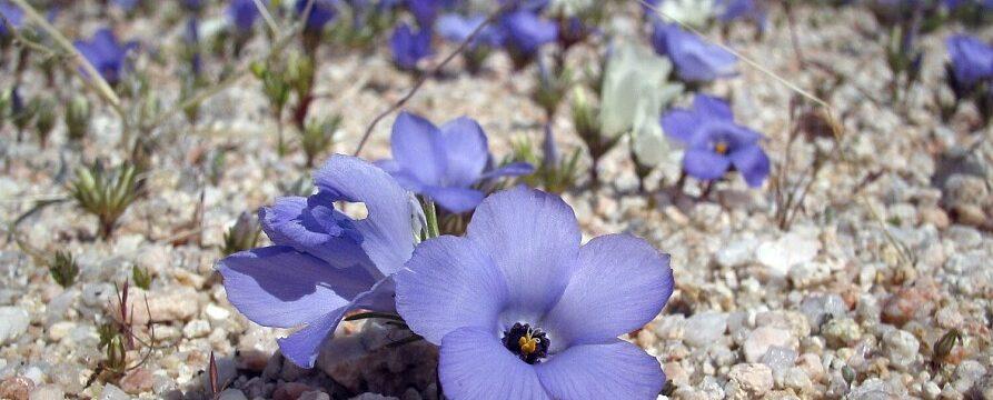 8 цветов, которые вырастут даже там, где ничего не растет