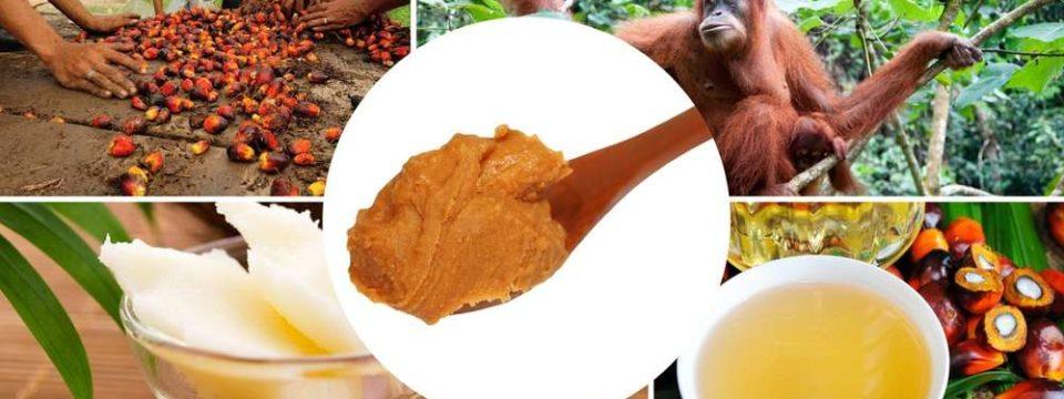 Истинный вред пальмового масла для здоровья человека